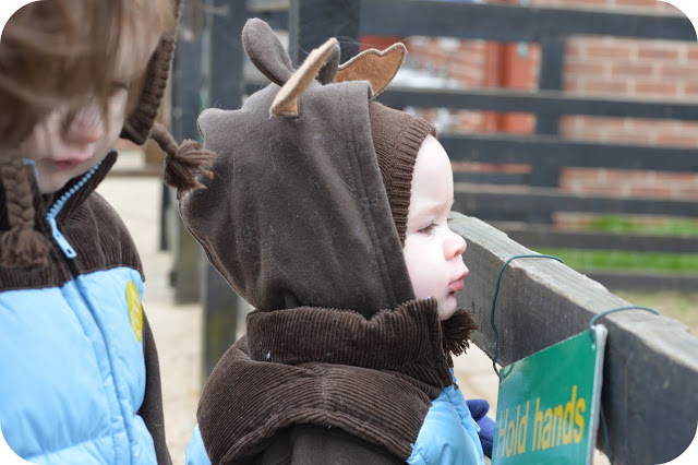EASTER MEMORIES 2013: SNOWY EASTER ANIMALS AT FINKLEY DOWN FARM