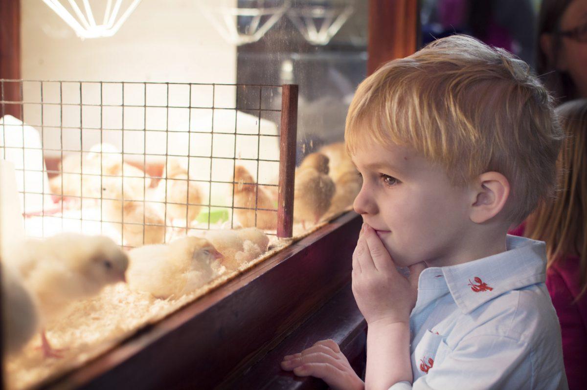 jensen eater chicks