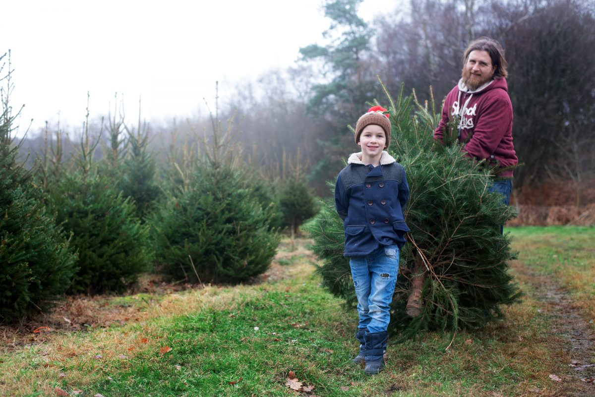 Christmas tree farm england hampshire