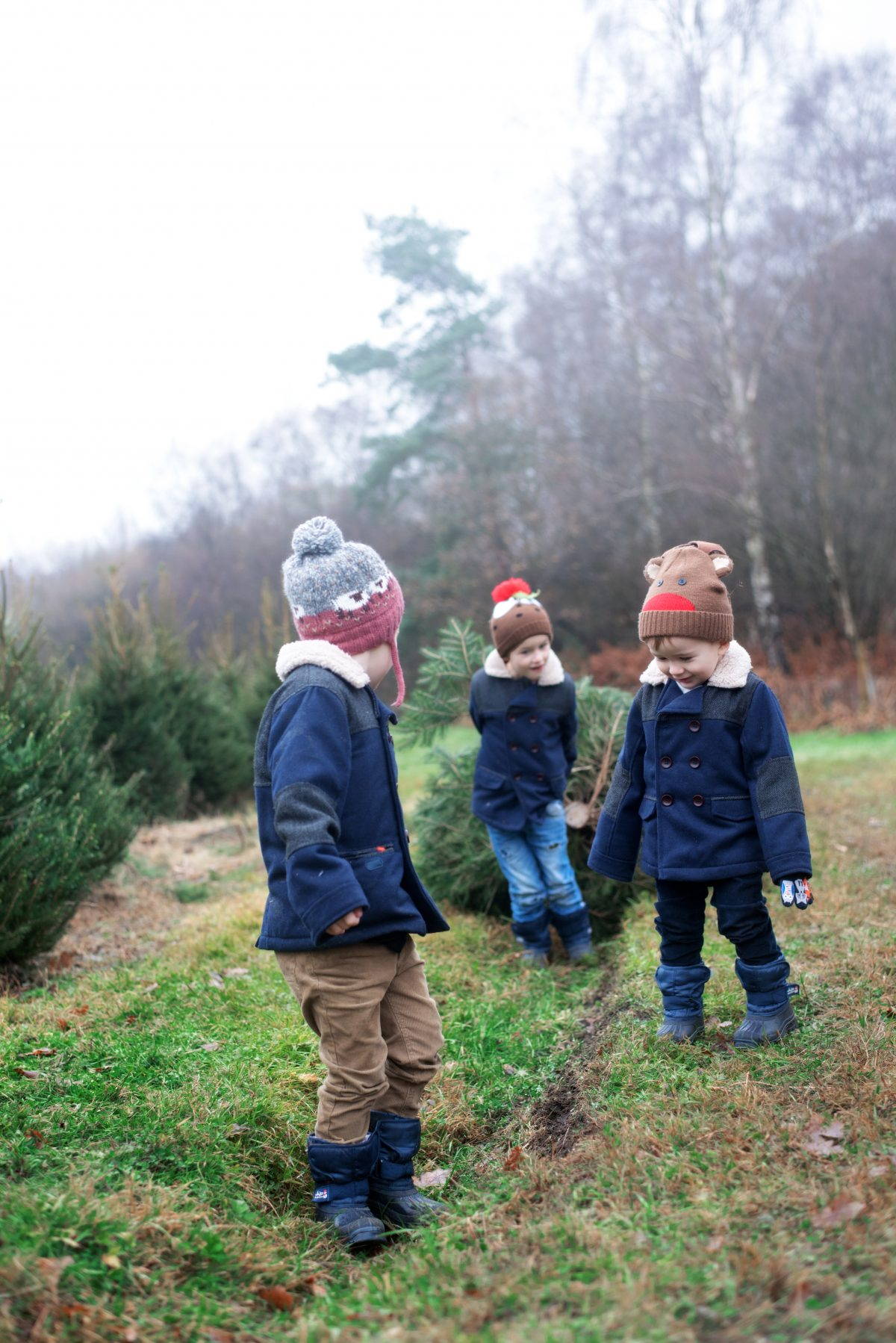 Christmas tree farm england hampshire boots mini club