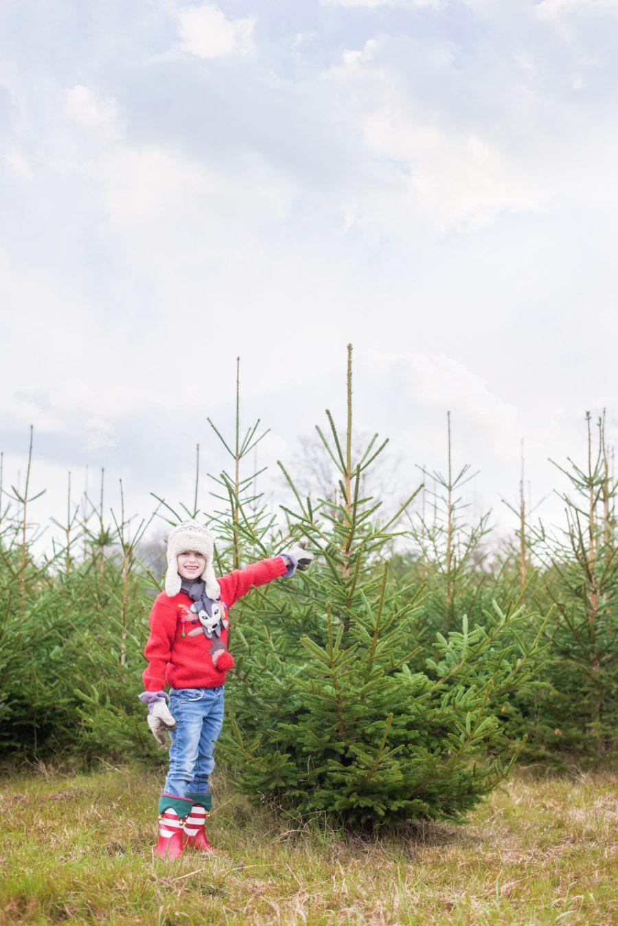 Headlands Farm Fishery Christmas Tree Farm