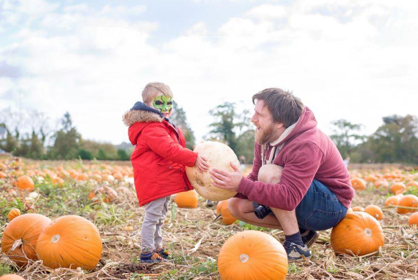 pumpkin patch 2017