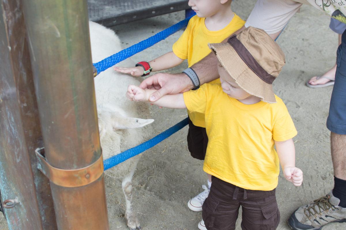 Disney's Animal Kingdom Theme Park Rafiki's Planet Watch Affection Section Conservation Station