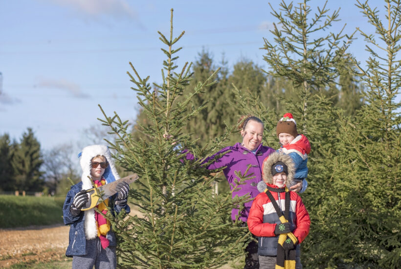 christmas tree farm romsey