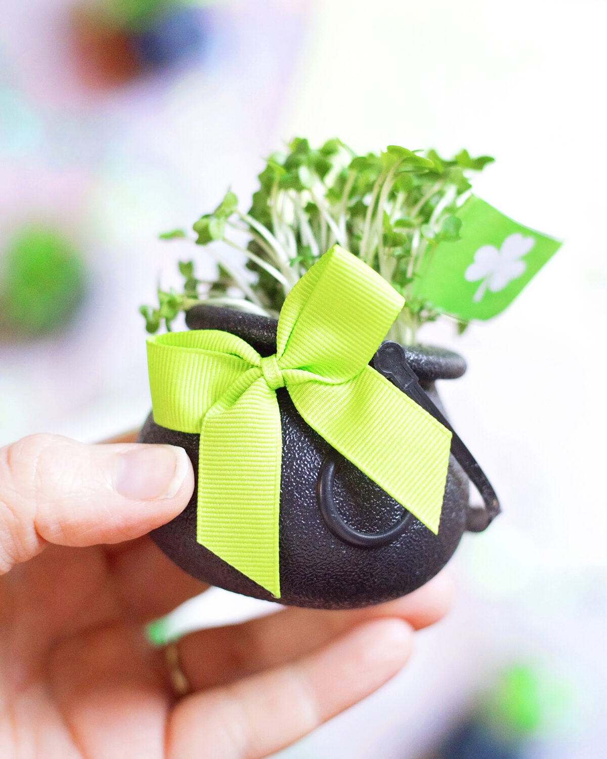 Decorated shamrock cress pots. Decorated with a green bow and shamrock flag to celebrate st. Patrick's day